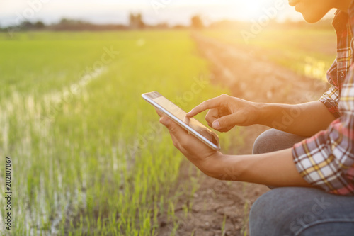 Fototapeta Asian young farmer using tablet at the green rice field obraz