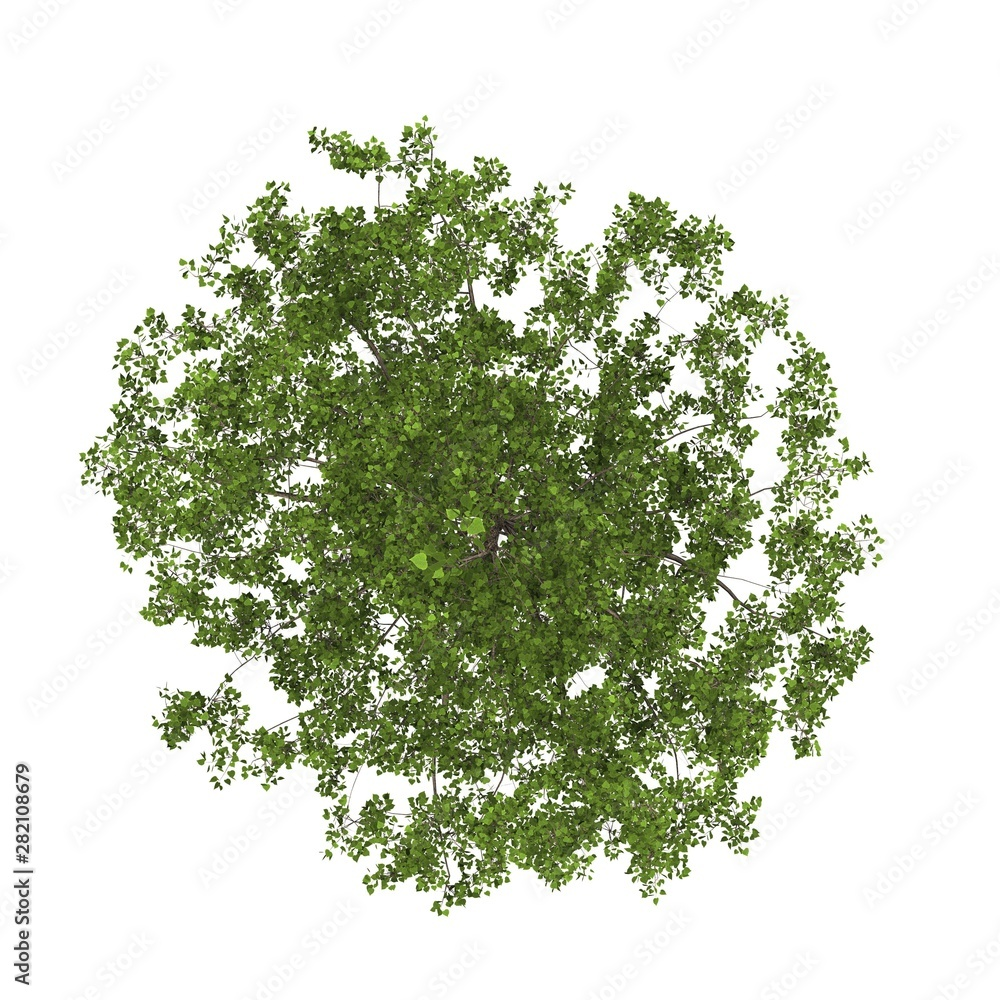 Fototapety, obrazy: Tree top view on white background layout plan