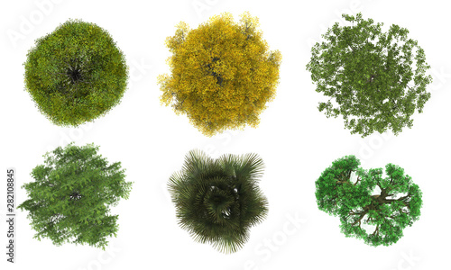 Deurstickers Planten Tree top view on white background layout plan