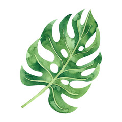 Fototapeta Minimalistyczny Watercolor tropical leaf. Monstera. Hand drawn summer illustration. Perfect for print, textile