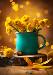 Beautiful yellow flower in ...