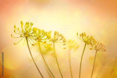 Valokuvatapetti Autumn flower background