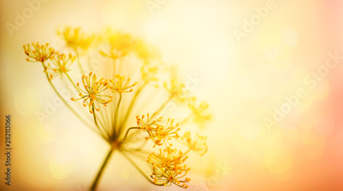 Autumn flower background Canvas-taulu
