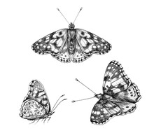 Hand Drawn Flying And Sitting Monochrome Butterflies