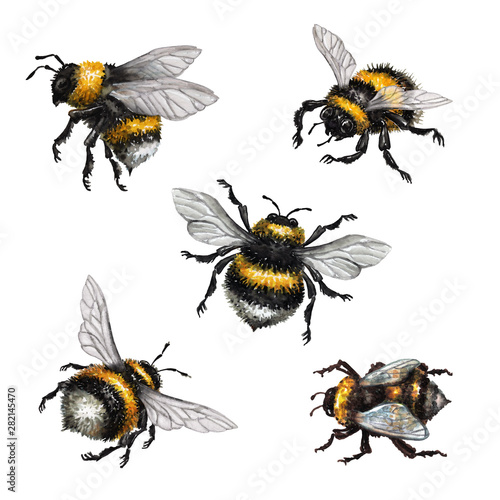 watercolor illustration, assorted bumblebees, wild insect clip art, isolated on Fotobehang