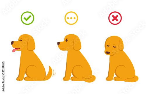 Valokuva Cartoon dog yes, now and maybe