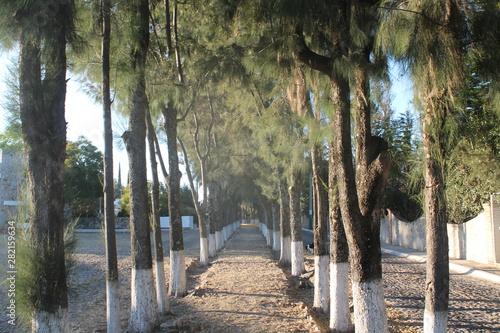 Photo Camino arboreo