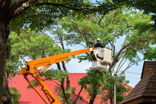 Workers Are Cutting And Decorating Tall Tree Branches. Near The Building Using A Crane To Facilitate