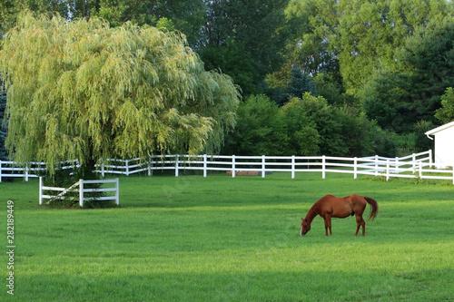 Fényképezés Wisconsin summer nature background with brown horse