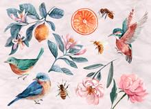 Floral Illustration, Leaf And Buds. Botanic Composition For Wedding Or Greeting Card. Branch Of Flowers