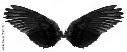 Foto  black wings on a white background