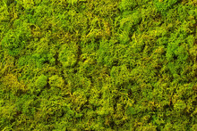 Texture Of Green Decorative Mo...