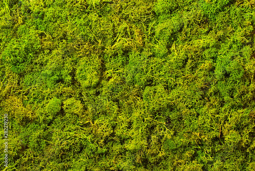 Canvas Print Texture of green decorative moss