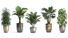 Collection Of Ornamental Plant...