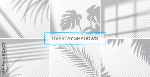 Fototapety, obrazy: Set of shadows, overlay effects mock up, window frame and leaf of plants, natural light, vector illustration.