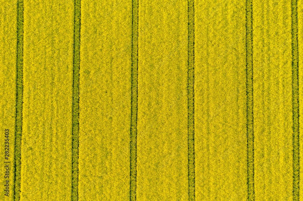 Fototapeta pola uprawne z lotu ptaka, żółty zielony młody rzepak, zborze