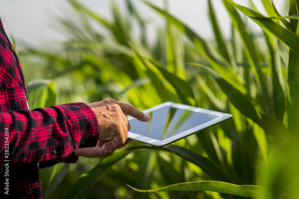 Fototapety, obrazy: Close up man touching tablet screen in a field