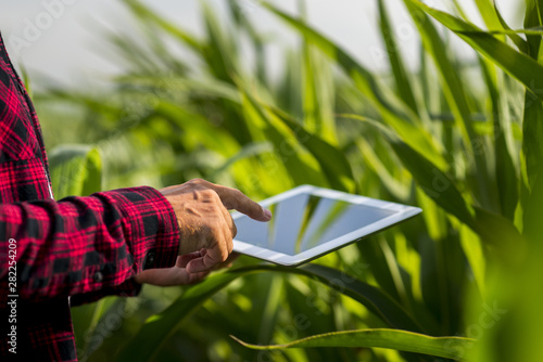 Vászonkép Close up man touching tablet screen in a field