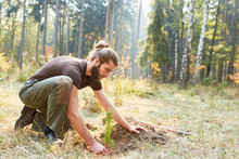 Plant Foresters At The Tree For Reforestation
