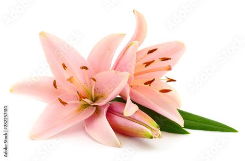 Fotografia  Two pink lilies.