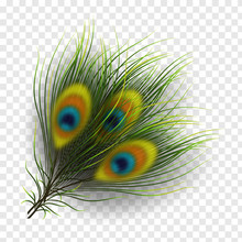 Peacock Feathers On Transparen...