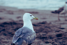 Photo Of The Details Of A Seagull On The Beach Sand And In The Background You Can See Another Seagull