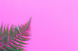 Leinwanddruck Bild - Creative layout made of colorful tropical leaves on pink background. Minimal summer exotic concept with copy space. Border arrangement.