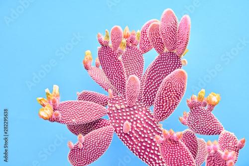 Fotografia Fashion Cactus Coral colored on pastel Blue background