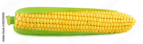 ripe corn isolated on a whi...