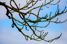 Blue Sky With Dried Branches A...