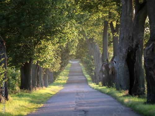 Alte Alleen in Polen Fototapeta