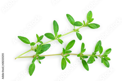 Fresh thyme spice isolated on white background, Top view Obraz na płótnie