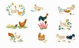 Fototapeta Fototapety na ścianę do pokoju dziecięcego - Set of farm or home chickens bird with rooster eating