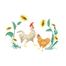 Cute White Rooster And Brown Chicken Near Sunflower
