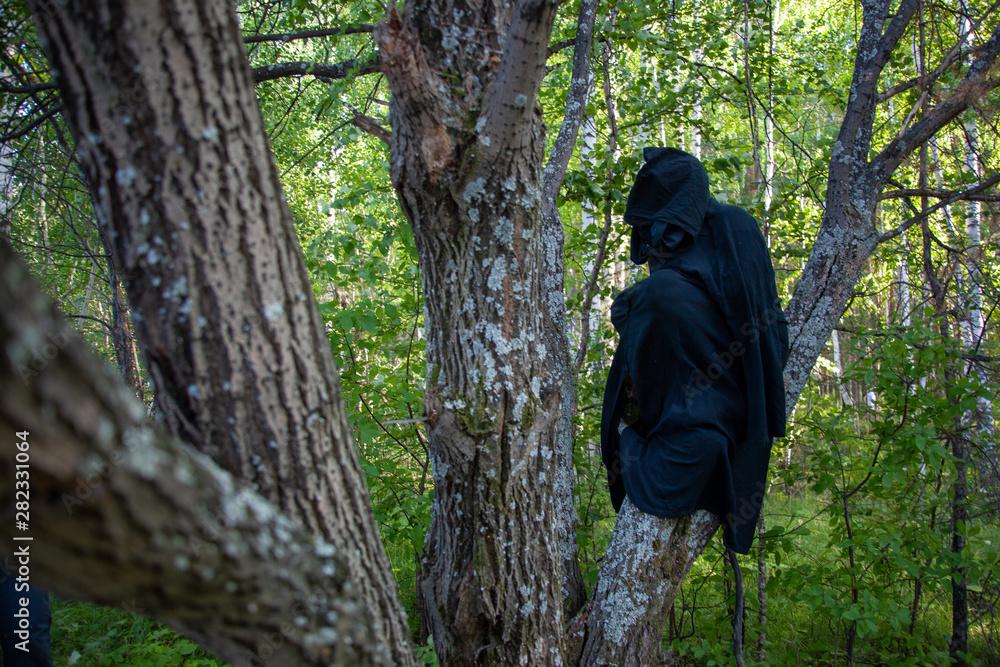 Fototapeta The robber on the tree