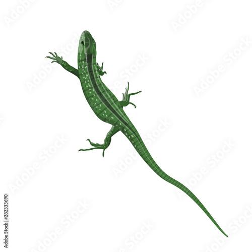 Green lizard vector Wallpaper Mural