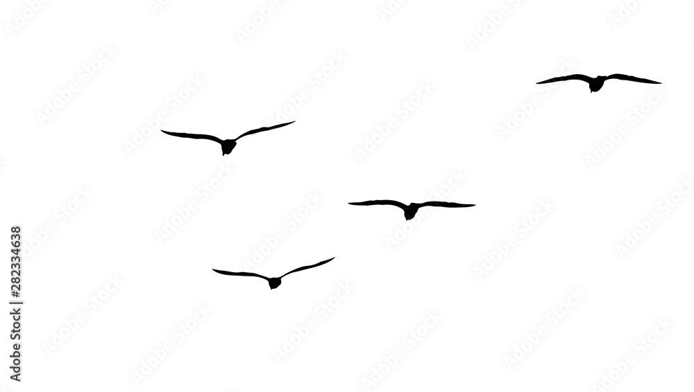 Fototapeta flock of migratory seagulls, silhouette