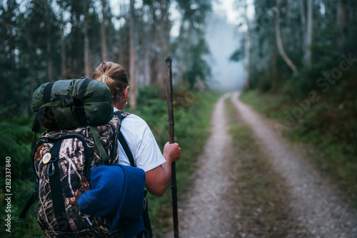 Way of Saint James pilgrim backpacker female going by the path through Eucalyptus forest  back view image shoot Canvas Print