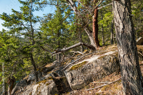 dense arbutus and pine trees grown on the rocky cliff face with mosses covered r Wallpaper Mural