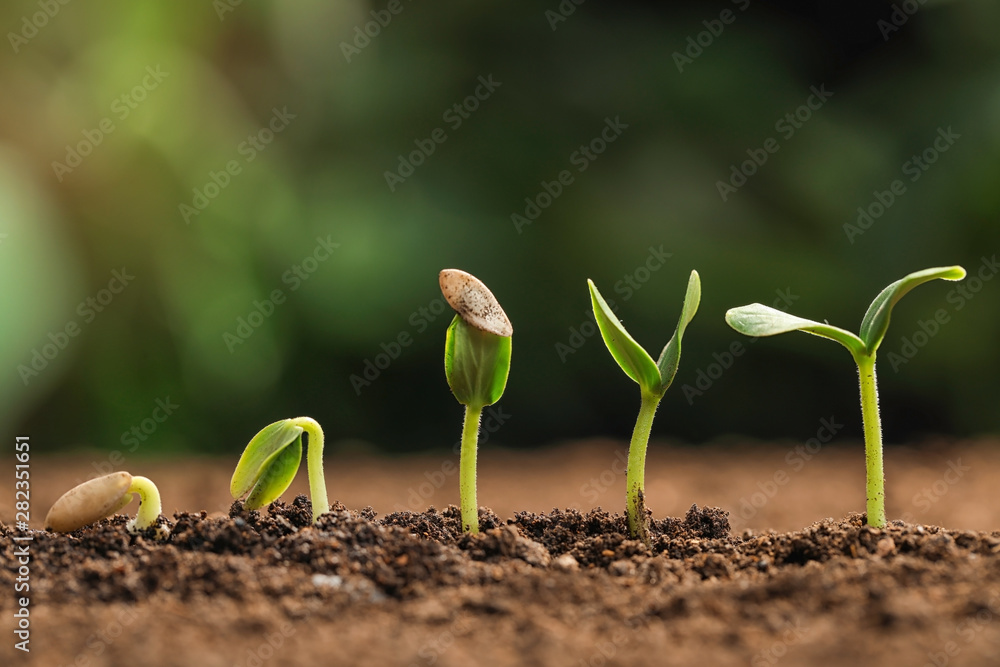 Fototapety, obrazy: Little green seedlings growing in fertile soil against blurred background