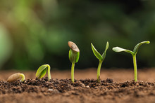 Little Green Seedlings Growing In Fertile Soil Against Blurred Background