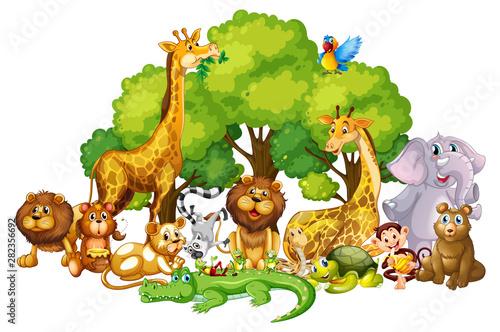Fototapeta Many cute animals in the park obraz na płótnie