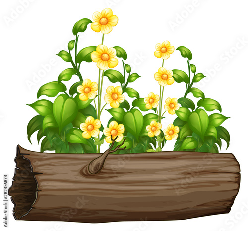 Flowers and wooden log on white background