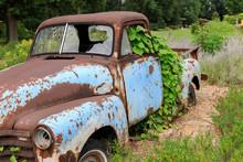 Vintage Truck Overgrown By Green Vine