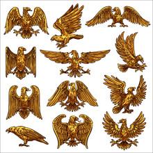 Golden Eagle, Hawk, Falcon, He...