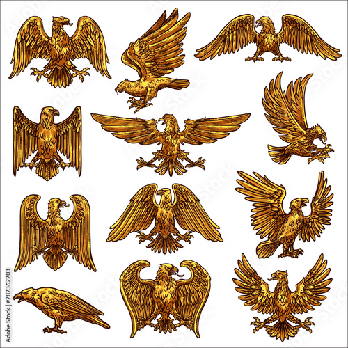Golden eagle, hawk, falcon, healdic birds of prey Fototapete
