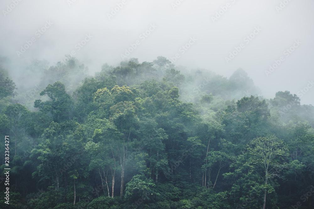 evergreen misty forest in foggy morning , thailand rainforest