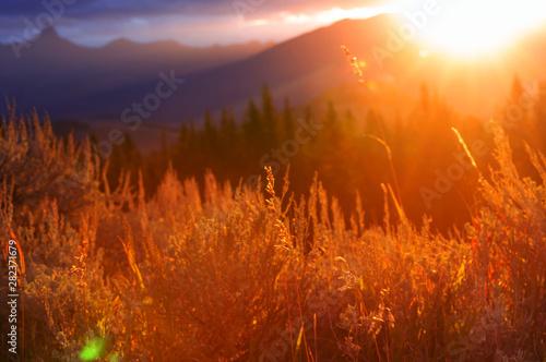 Montage in der Fensternische Rot kubanischen Autumn meadow