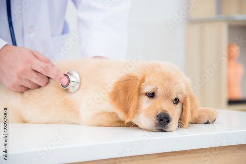 Sick dog face expression while veterinarian checking dog by stethoscope in vet clinic