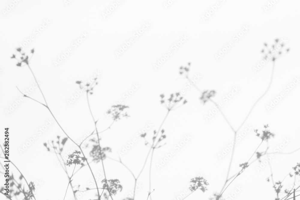 Fototapeta Gray shadows of the flowers on a white wall. Abstract neutral nature concept background. Space for text. Blurred, defocused.